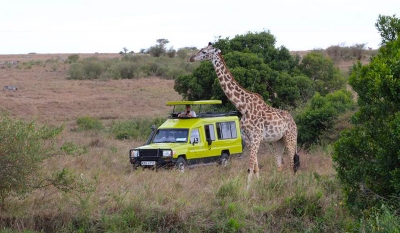 Cross Border safari