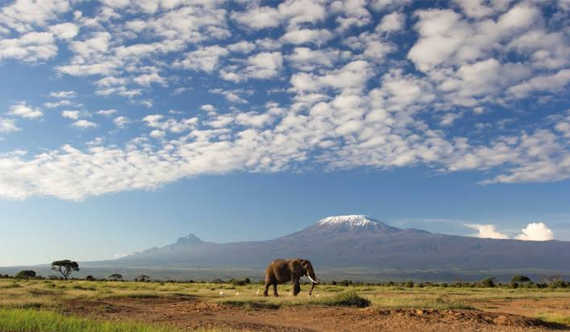 A Deluxe Southern Kenya Tour and Beach