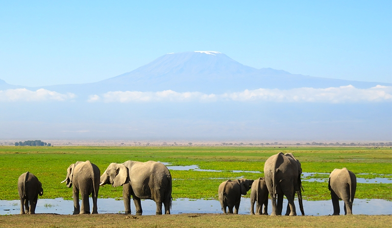 Kenya – Tanzania 10 Days Safari