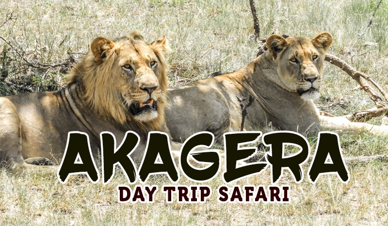 A day at Akagera National Park