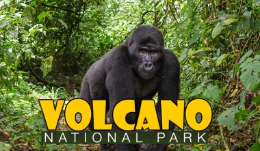A day with Gorillas Volcano National Park