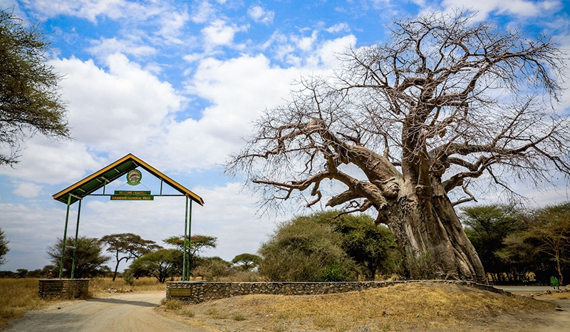 2 Days/1 Night Tarangire National Park Safari