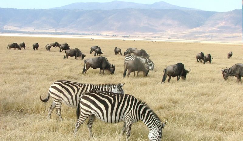 3 Days/2 Nights Ngorongoro Lake Manyara Safari