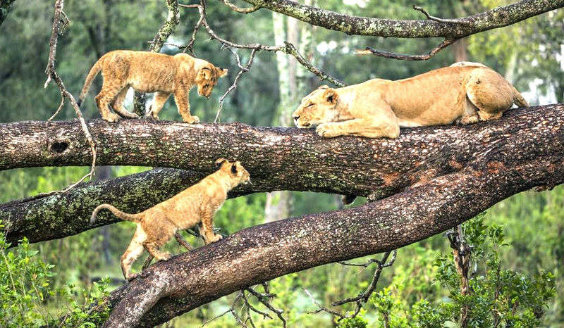 3 Days/ 2 Nights Tarangire, Ngorongoro & Lake Manyara Safari